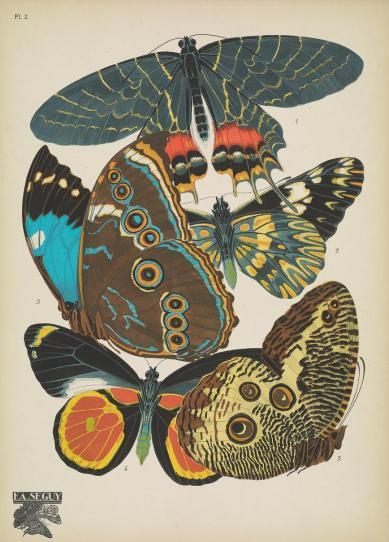 Papillons00SeYg_0009